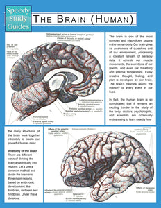 The Brain (Human) (Speedy Study Guide)
