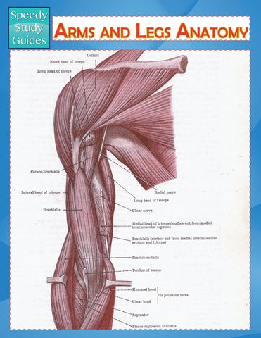 Arms and Legs Anatomy (Speedy Study Guide)