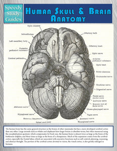Human Skull And Brain Anatomy (Speedy Study Guide)