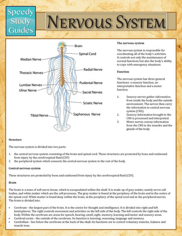 Nervous System (Speedy Study Guide)