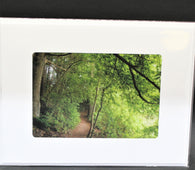 Enchanted Forest Path Photo Card