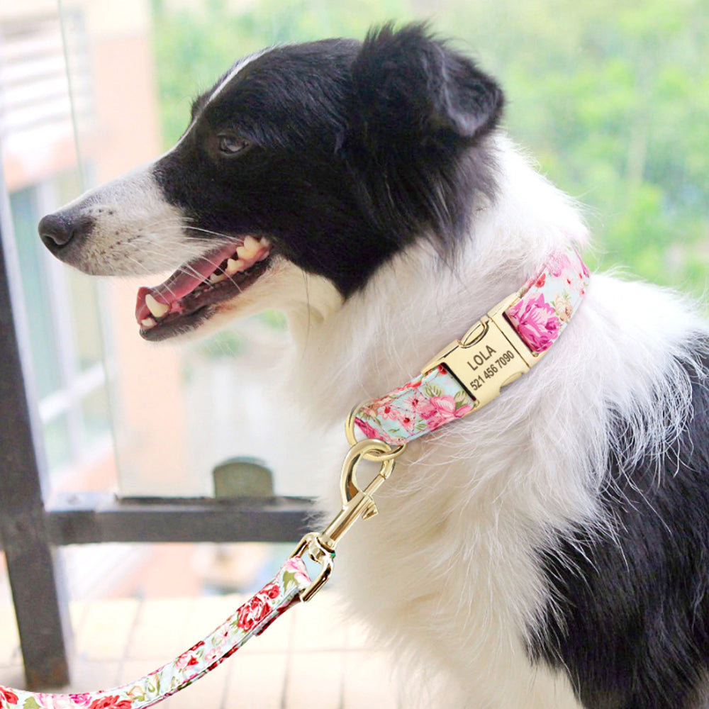 Dog wearing a pink and blue leash