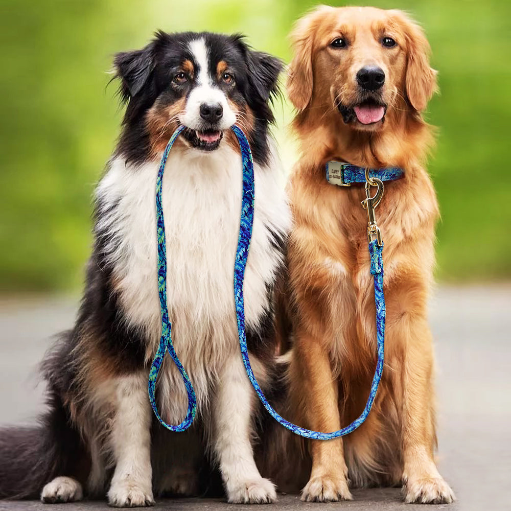 Two cute dogs with a blue leash
