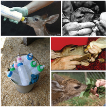 Load image into Gallery viewer, Fund-A-Need: Fawn Formula