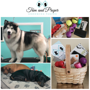 The Perfect Pet Package from Trim & Proper Grooming Parlor | Value: $300