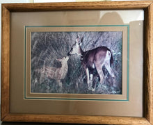 "Load image into Gallery viewer, ""Doe & Fawn"": An Autographed, Framed Richard Jackson Photo 