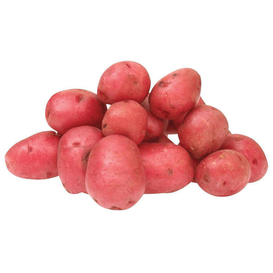 Potato - Red Small