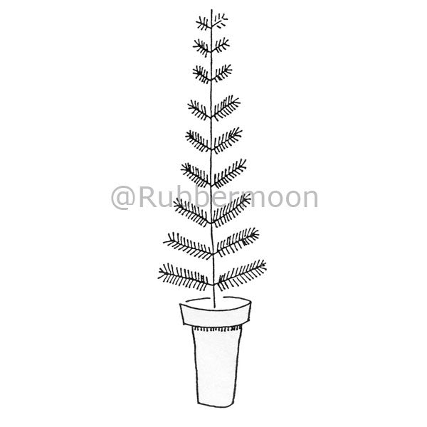 pine tree in a pot