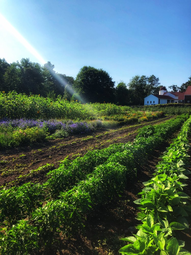 This week's Farmer Focus: Clark Farm in Carlisle