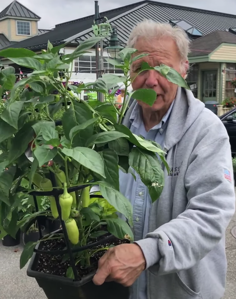 Tony's Tips: Mariachi Chile peppers for your patio