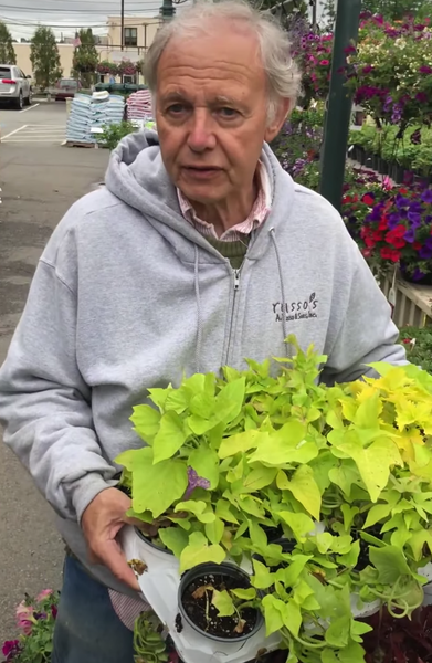 Tony's Tips: Our diverse Coleus collection