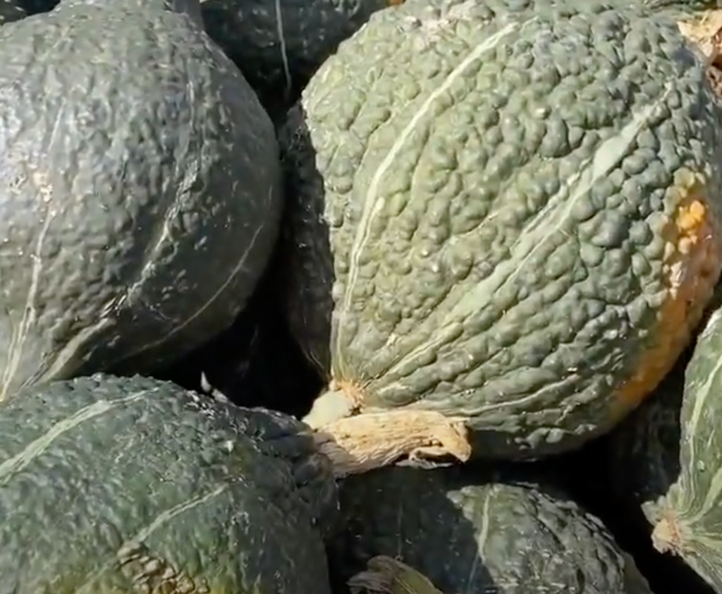Tony's Tips: Black Hubbard squash is a hardy favorite