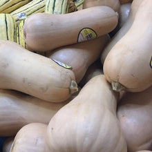 Load image into Gallery viewer, Squash, Butternut, sold by the each