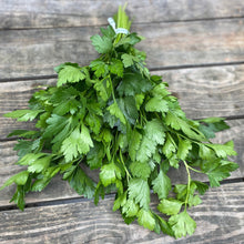 Load image into Gallery viewer, Herbs, Parsley, Flat Leaf Parsley, bunch