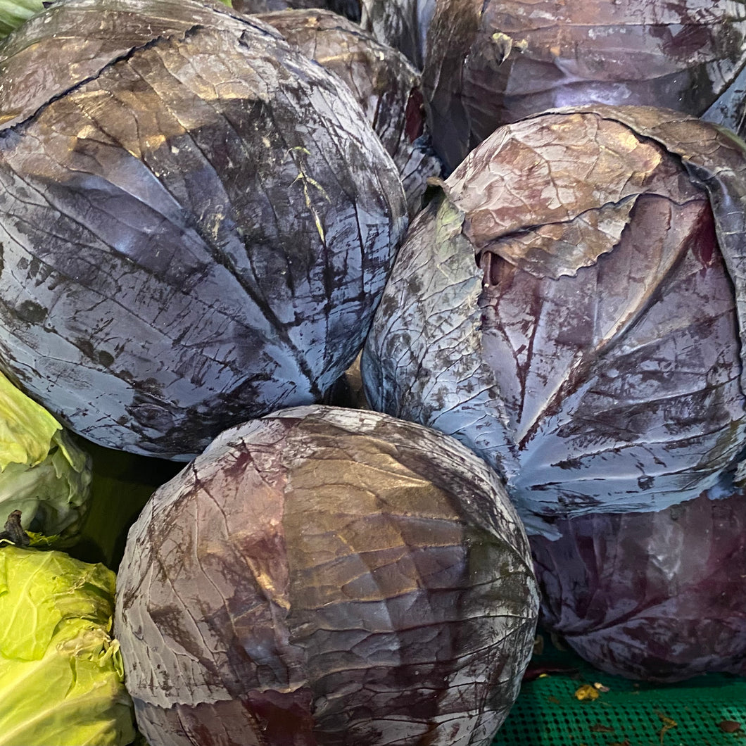 Cabbage, Red, each