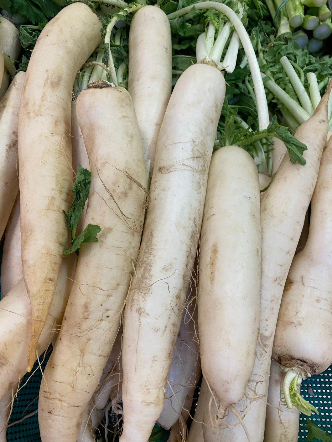 Loose Daikon, each