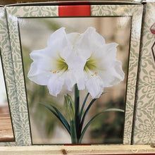 Load image into Gallery viewer, Amaryllis Box