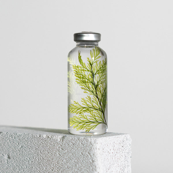 Bottle Plant 30ml | Tabaria fern