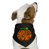 Dog Thanksgiving Bandana - Hello Pumpkin - black