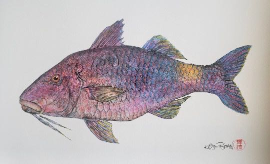 "Deep Hawaii Art: ""Kualana's Moana Kali"" The Blue Goatfish Gyotaku"