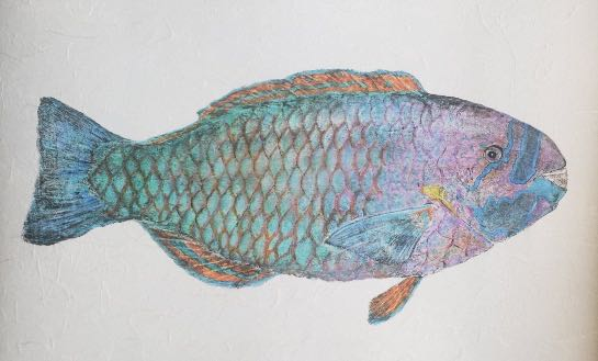 "Deep Hawaii Art: ""Skittles"" The Uhu (Parrotfish) Gyotaku"