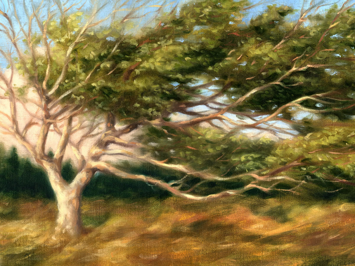 Prevailing Wind (LE)