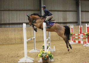 Incredibly Talented Gelding By Balou De Rouet