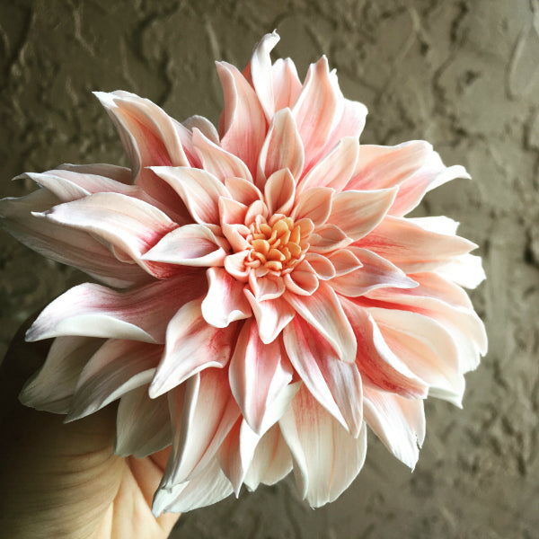 Artist Julia Dogan creates realistic flowers and flower arrangements with Hearty Clay ultra lightweight air dry clay.  These air dry clay flowers look so realistic!