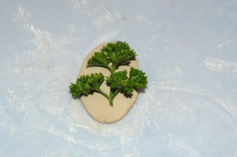 imprint air dry clay with herb