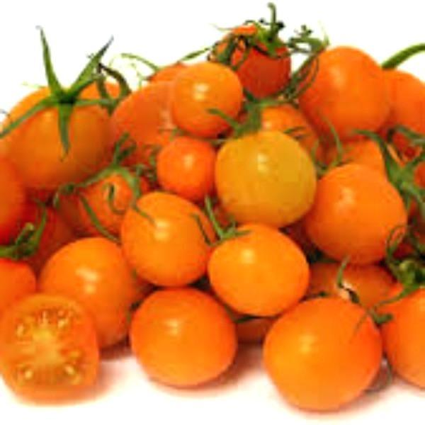 Sun Gold Tomatoes grown organically on Koh Samui, Thailand