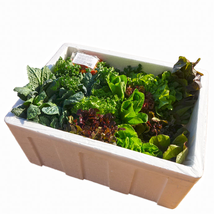 Organic Salad Box with Extra Kale (Family Size)