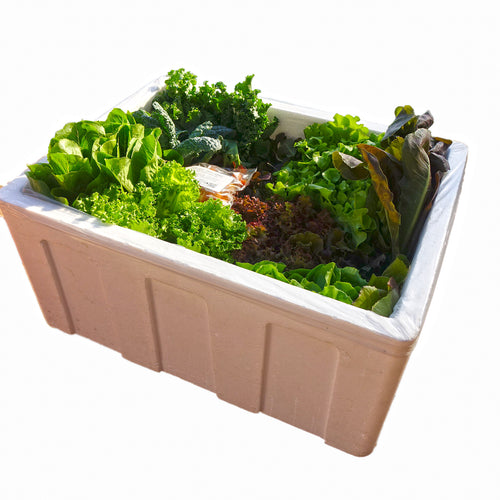 Organic Salad Box (Family Size)