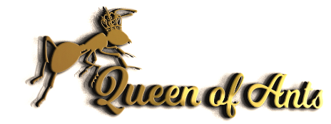 Queen of Ants- Australian Ant Queens for sale