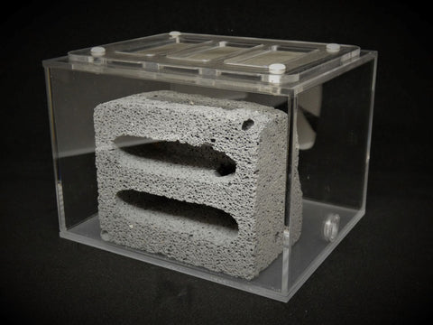 ytong aerated concrete ant nest formicarium