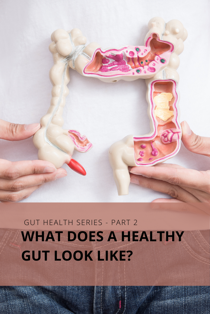 House of health - Gut Series: Part 2