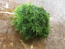Load image into Gallery viewer, Christmas Moss on Rocks