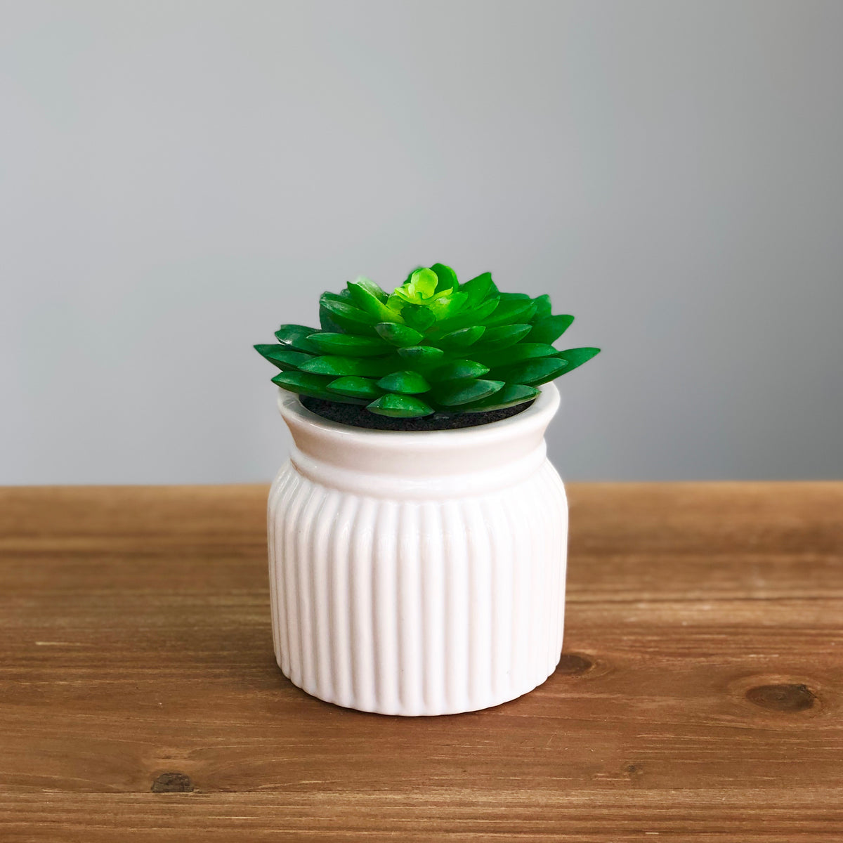 Green Succulent in Ceramic Stripes Pot