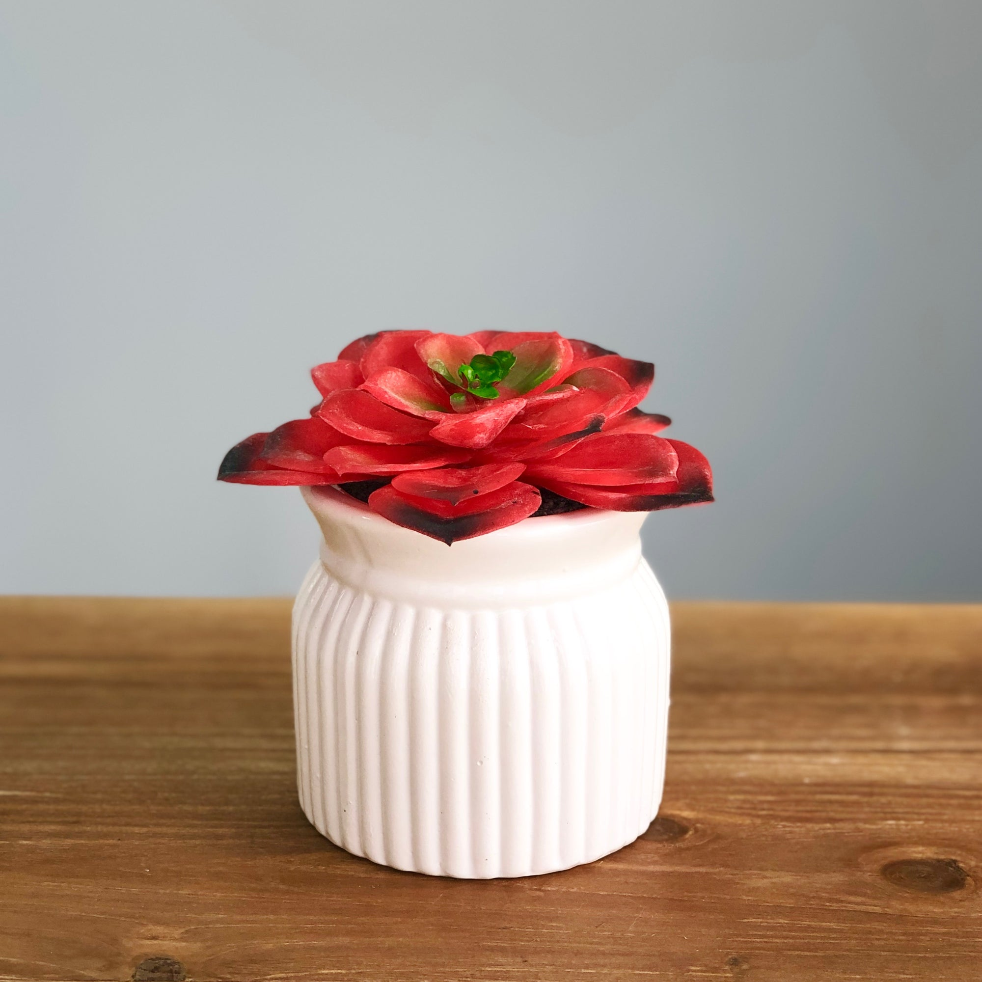 Red Succulent in Ceramic Pot