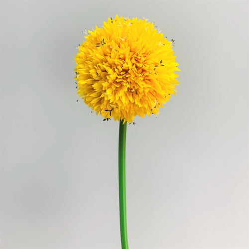 Yellow Alium Big Round Flowers