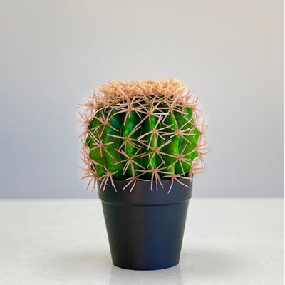 Small Green Cactus Botanical Pot