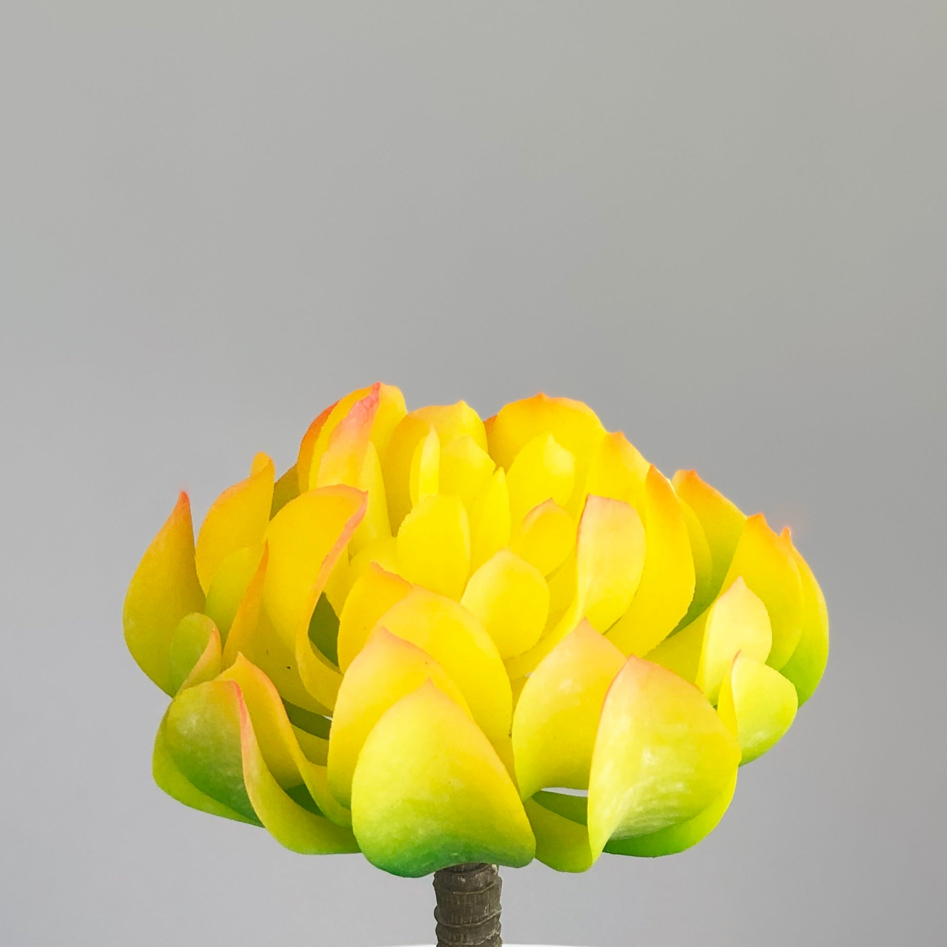 Yellow Succulent Latex Leaf Synthetic