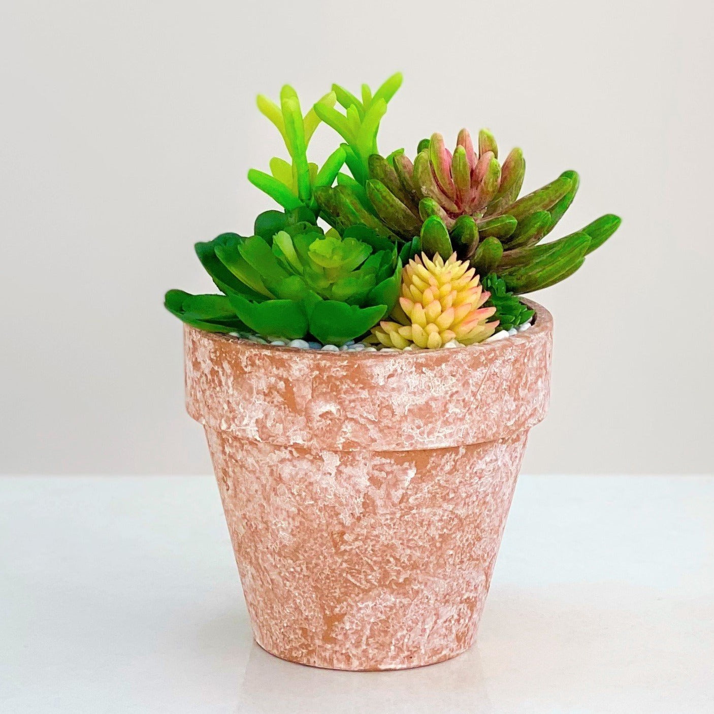 Succulent Arrangement in a Round Mud Pot