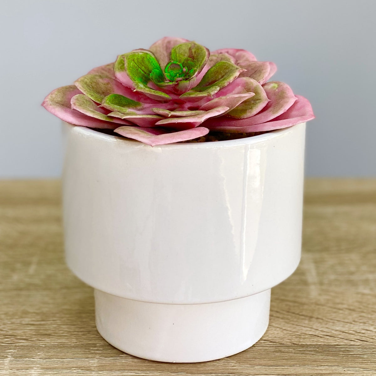 Pink Succulent Simple Ceramic Pot