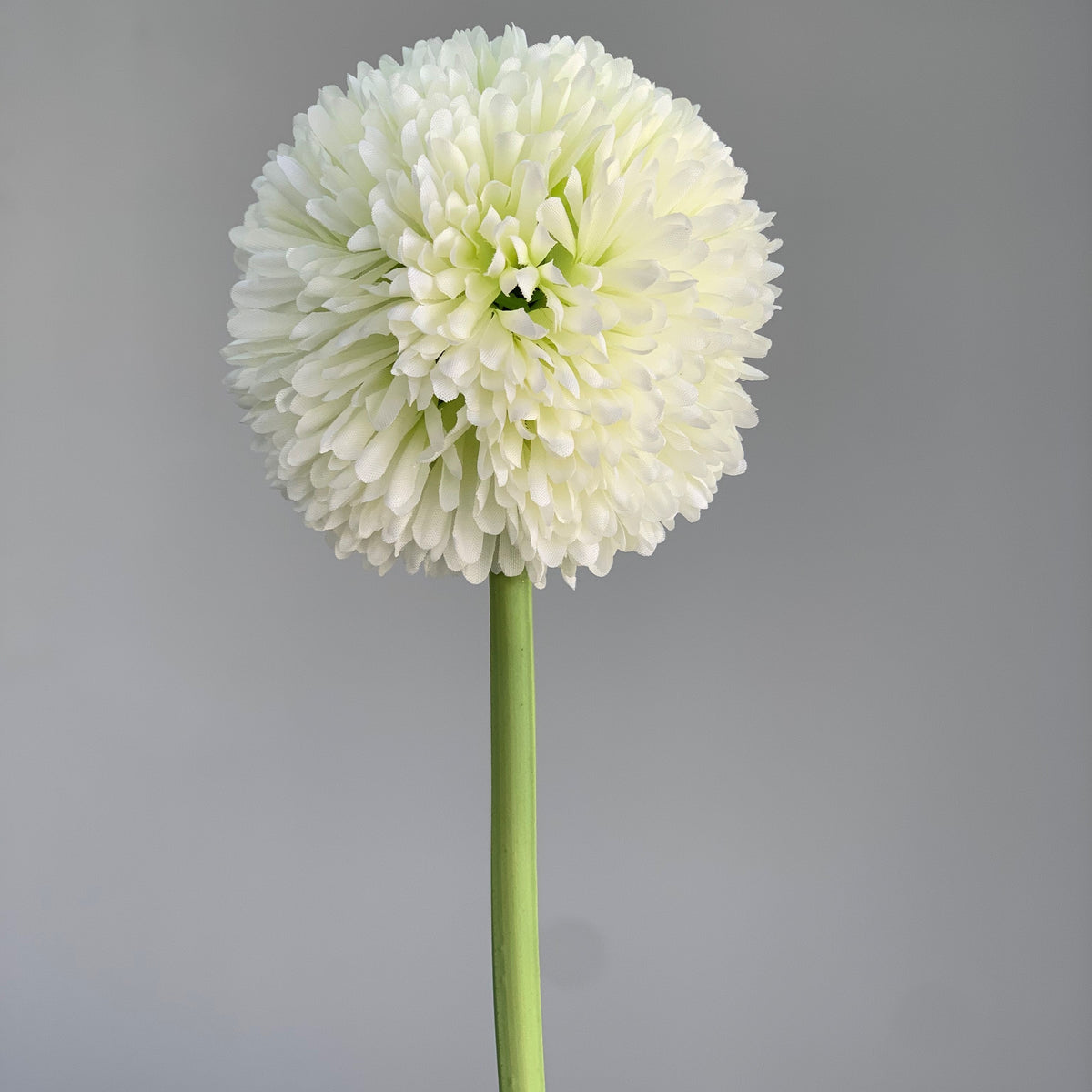 Single Daisy Ivory Ball