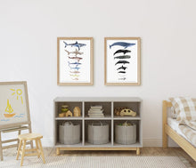 Load image into Gallery viewer, Sharks Size Chart Art Print