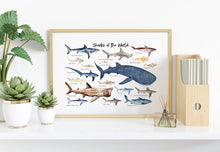 Load image into Gallery viewer, Sharks of the World Art Print