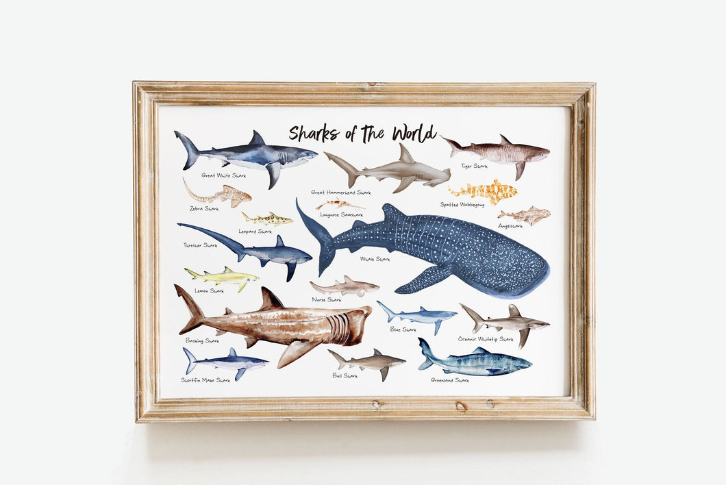 Sharks of the World Art Print