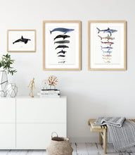Load image into Gallery viewer, Whale Size Chart Art Print