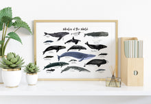 Load image into Gallery viewer, Whales of the World Art Print
