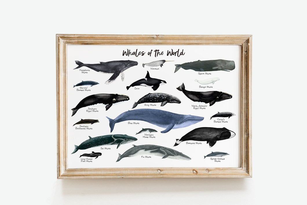 Whales of the World Art Print